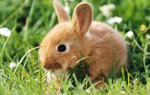 cute-little-rabbit